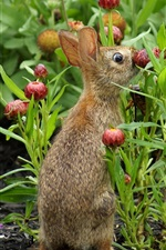 Preview iPhone wallpaper Wild rabbit, flowers