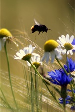 Wildflowers, bumblebee, blurry background