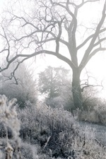 Preview iPhone wallpaper Winter, frost, trees, grass, path, morning