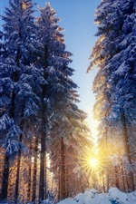 Preview iPhone wallpaper Winter, snow, forest, trees, sun rays