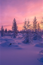 Preview iPhone wallpaper Winter, snow, sunset, forest, trees, dusk