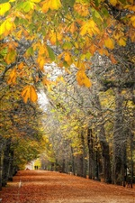 Preview iPhone wallpaper Autumn, trees, path, park, bench