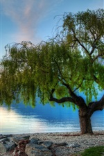 Preview iPhone wallpaper Beautiful nature, lake, trees, morning, dawn