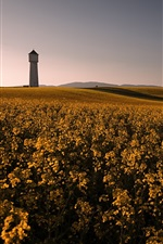 Preview iPhone wallpaper Beautiful rape field, yellow flowers, lighthouse