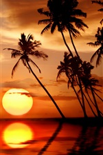 Preview iPhone wallpaper Beautiful tropical sunset, palm trees, sea, beach