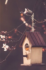 Preview iPhone wallpaper Bird house, cherry flowers