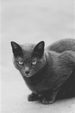 Preview iPhone wallpaper Black and white picture, grey cat