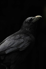 Preview iPhone wallpaper Black bird, raven, black background