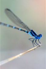 Preview iPhone wallpaper Blue dragonfly, wings, blurry background