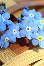 Preview iPhone wallpaper Blue forget-me-not flowers