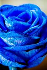 Preview iPhone wallpaper Blue petals rose flowers