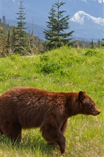 Preview iPhone wallpaper Brown bear, grass, mountains, trees, clouds