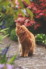Preview iPhone wallpaper Brown cat look back, path, park