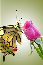 Preview iPhone wallpaper Butterfly and pink rose