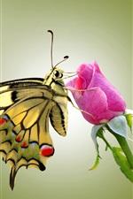미리보기 iPhone 배경 화면 나비와 핑크 장미