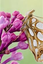 Butterfly, moth, wings, pink flowers