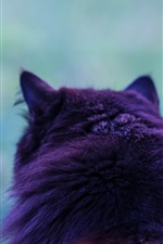 Preview iPhone wallpaper Cat back view