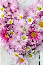 Preview iPhone wallpaper Chamomile, chrysanthemum, pink and white flowers, love heart