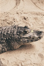 Preview iPhone wallpaper Crocodile, reptile photography