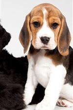 Preview iPhone wallpaper Cute puppies, black and spotted dogs