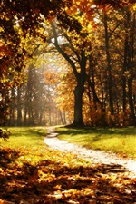 Preview iPhone wallpaper Forest, trees, road, autumn, sun rays