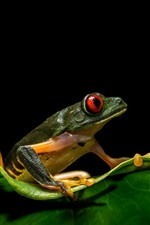 Preview iPhone wallpaper Frog, leaf, wildlife