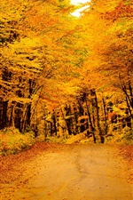 Preview iPhone wallpaper Golden autumn, road, trees, yellow leaves