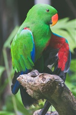Preview iPhone wallpaper Green feathers parrot, birds photography
