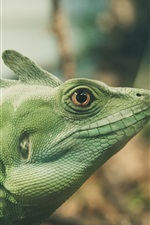 Preview iPhone wallpaper Green lizard, reptile