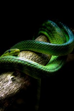 Preview iPhone wallpaper Green snake, black background