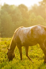 Preview iPhone wallpaper Horse, grass, sunshine