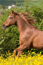 Preview iPhone wallpaper Horse running, brown mane, flowers