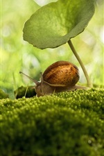 Preview iPhone wallpaper Insect macro photography, snail, umbrella, moss