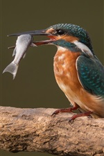 Preview iPhone wallpaper Kingfisher catch a fish, birds photography