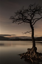 Preview iPhone wallpaper Lake, tree, evening