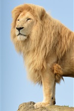Preview iPhone wallpaper Lion standing on stone