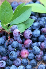 Preview iPhone wallpaper Many ripe blueberries