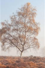 Preview iPhone wallpaper Morning, fog, trees, grass, autumn
