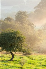 Preview iPhone wallpaper Morning nature landscape, fog, trees, summer