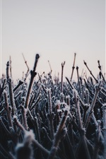 Preview iPhone wallpaper Morning, twigs, frost, cold dawn
