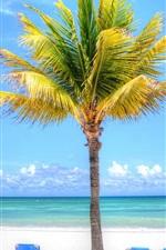 Palm tree, beach, sea, chaise, tropics