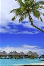 미리보기 iPhone 배경 화면 야자의 나무, 열대의 여름, 낙원, 해변, 바다, 리조트