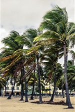 Preview iPhone wallpaper Palm trees, wind, park, clouds, Florida, USA