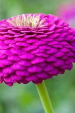 Preview iPhone wallpaper Purple flower close-up, stem, bokeh