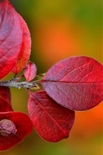 Red leaves, twigs, autumn, blurry background