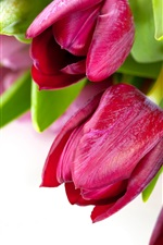 Preview iPhone wallpaper Red tulips photography, white background
