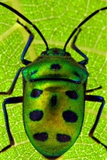 Preview iPhone wallpaper Scarab, beetle, insect close-up, green leaf