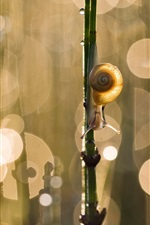 Preview iPhone wallpaper Snail, twig, glare, bokeh