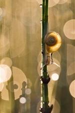 미리보기 iPhone 배경 화면 달팽이, 나뭇 가지, 섬광, bokeh