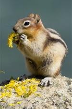 Squirrel eat flowers